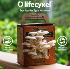 Connect with your food as you watch it grow right in front of your eyes. Life Cykel's Oyster Mushroom Grow Kit allows you to easily grow delicious mushies in your own home, fun for everyone! Vegetarian Steak, Mushroom Grow Kit, Health Options, Meat Substitutes, House Plants Decor, Circular Economy, Grow Your Own, Fungi, Superfood