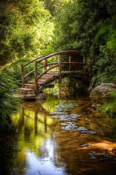 Arched log bridge over tranquil stream...