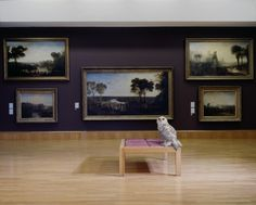 Karen knorr - here and now Tate Britain, Bold And The Beautiful, Close Image, Photo Art, Modern, Photography, Artwork Ideas, Arrow Keys, Owls
