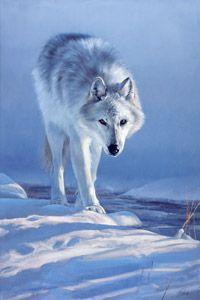 Master of Prowlin by Edward Aldrich wolf Beautiful Wolves, Most Beautiful Animals, Beautiful Creatures, Animals And Pets, Cute Animals, Strange Animals, Malamute, Canis Lupus, Husky