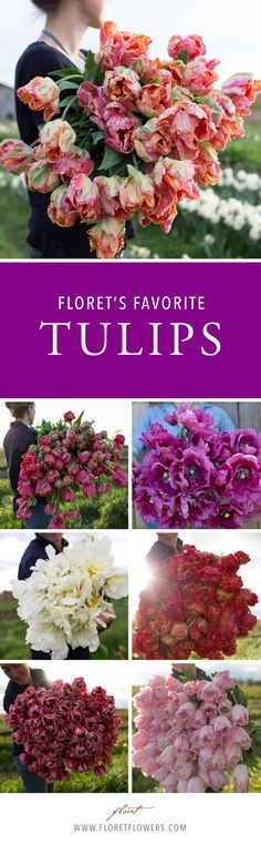 One of the easiest spring bulbs you can grow, tulips are a mainstay in the spring cutting garden. Their brilliantly colored flowers and waxy petals make them the jewels of spring.
