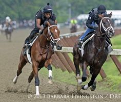 Micromanage and Verrazano working out at Saratoga this morning 7/22/13