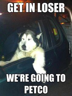 Cool dog behind the wheel