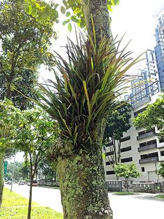 Hairy tree with fern in Singapore
