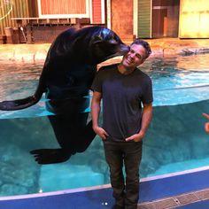 Was feeling depressed so his brother took him swimming and a sea lion gave him a hug. Marvel Jokes, Marvel Actors, Marvel Funny, Marvel Avengers, Avengers Superheroes, Mark Ruffalo, Peggy Carter, Godzilla, Techno