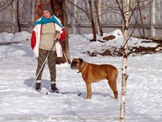 Dogs in Russia. Photos in Raskraska project. Moscow Russia, Boxer Dogs, Dog Photos, Projects For Kids, Mistress, February, Snow, Photo And Video, Free