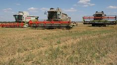 Wheat prices rise on Crimea and Ukraine worries