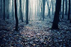 Seasons by Erik Witsoe, via Behance