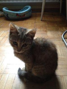 Кошечка ищет дом — Animalsburg.ru Анималсбург #кошка  #кошкаищетдом  #котенок  #котенокищетдом #котенокищетхозяина