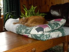 Palooka, discovered sleeping on the coffee table, claiming Michelle's unfinished quilt!