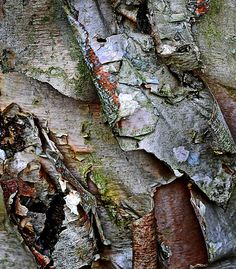 A Little Rough (Crepe Myrtle Bark) by Mark Luftig, via 500px