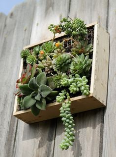A series of wall mounted boxes with succulents. Beautiful!