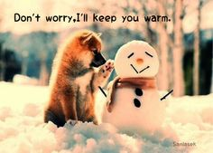1000 images about holiday humor on pinterest christmas humor christmas quotes and funny - Keeping outdoor dog happy winter ...
