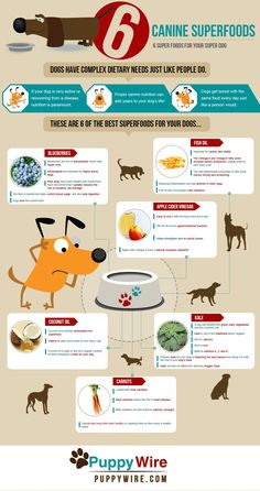 Dog Superfoods Infographic - 6 Top Superfoods for your Dog  #dog #infographic