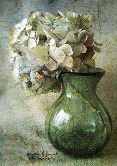 Hydrangea green and cream