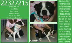 Lovables:**Fort Worth, TX**CURRENT STATUS: Must be tagged for adoption or rescue by 9am on 04/08/14**  Reason for URGENT STATUS: Upper Respiratory Infection  Animal ID: 22327215 Name: Carter Breed: Pit Bull Sex: Male Age: 1 year Weight: 61lbs FULLY VETTED Heartworm Negative