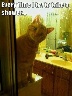 MOL! (MeowOutLoud!) >^..^