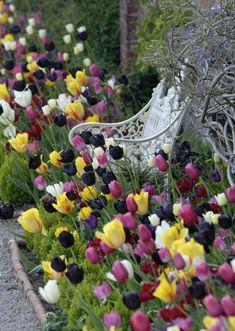 Beauty Tulips Arrangement for Home Garden 27