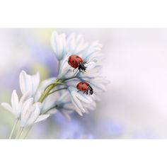 Omax Decor Ladybirds Gallery Wrapped Print on Canvas