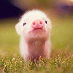 Cute little pig:)