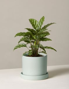 Indoor Potted Plants Delivered to Your Door – The Sill