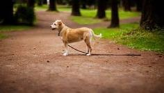 9 Steps to Take When Your Dog Goes Missing