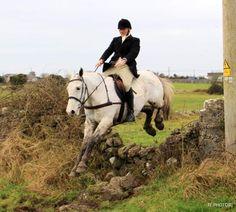 Blue Joey hunting Dec 2019. #loveirishhorses #horsesinireland #horseforsale Cross Country Jumps, Beach Rides, Horses For Sale, Cob, Equestrian, Ireland, Hunting, Blue, Animals