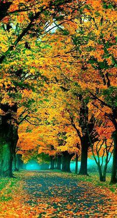 Autumn walk in the park | Beautiful tree tunnel