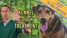 Kennel cough in dogs is a common infectious disease but are antibiotics always the best way to treat it? Can you in fact simply treat them at home? Also, does the vary depending on the age of a dog, or other diseases they might be suffering from? Kennel Cough Treatment, Home Treatment, Dog Coughing, How To Stop Coughing, Sick Dog, Do You Really, Health Articles, Pet Health, Dog Cat