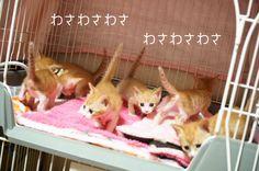 里親さんブログミルキーズのお引越し - http://iyaiya.jp/cat/archives/79639