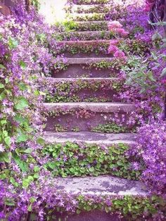 ~Lilac Stairways