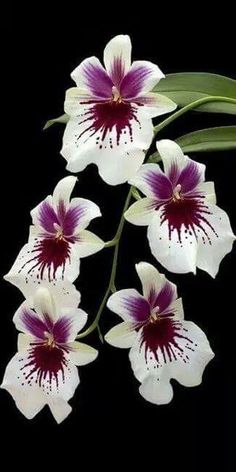 #Orchids http://www.roanokemyhomesweethome.com