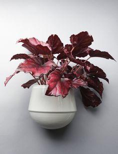 Babylon  www.fennaoosterhoff.nl  #flowerpot #plants #wall #interior #ceramics #porcelain fotografie: Louise te Poele