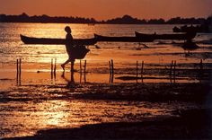 The Danube Delta (Delta Dunarii) -   A UNESCO Natural World Heritage ! Danube Delta, City People, Natural World, Past, Places To Visit, Photos, Past Tense, Pictures