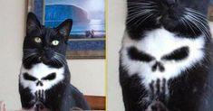 【ドクロやんけ!】もはや偶然じゃ説明できない!完全に○○な模様をもつ猫12匹|ペットフィルム -犬・猫・ペットの画像・動画まとめ petfilm.biz