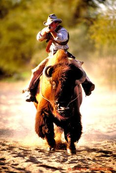 It's one thing that this guy is riding a bison...it's quite another that he is not using a saddle!