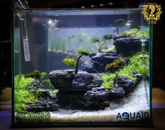 66 best aquascape images fish tanks aquariums planted aquarium rh pinterest com