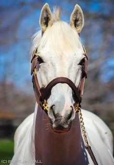 Tapit...King of sires!
