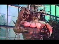 Revenge of Dr X - Full Length Horror Movies
