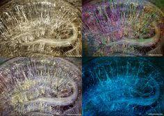 Brainbow Hippocampus