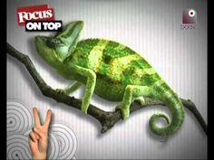 Le 5 invenzioni più inutili del mondo || Focus on Top