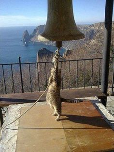 I'll ring this bell til you bring me more food!