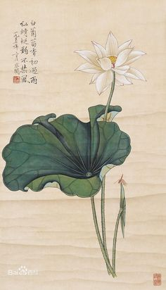 Let go of anger. Let go of pride. When you are bound by nothing You go beyond sorrow. ~ Buddha: Dhammapada ~ painting by Yu Feian Korean Painting, Japanese Painting, Chinese Painting, Illustration Botanique, Botanical Illustration, Illustration Art, Illustrations, Watercolor Flowers, Watercolor Art
