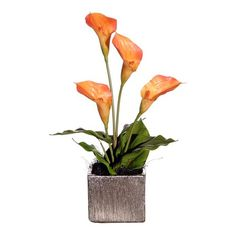 I pinned this Floral Potted Peach Calla Lillies from the Cream & Creamsicle event at Joss and Main!