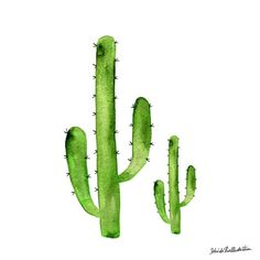 "Drawings + Words auf Instagram: ""Don't be so prickly, it's Hump Day! #illustrator #belindaxiaillustration"""