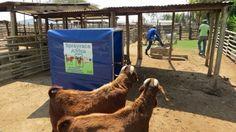 Home - Spray Race Africa - Orange_Orange Livestock, Cattle, Africa, Racing, Orange Orange, Animals, Gado Gado, Animaux, Auto Racing