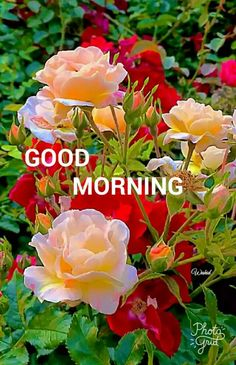 Good Morning with Flowers Good Morning Beautiful Pictures, Good Morning Images Flowers, Good Morning Picture, Morning Pictures, Beautiful Flowers Wallpapers, Beautiful Roses, Beautiful Gardens, Morning Rose, Flower Images