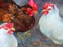 Watercolor Hens - Bing images