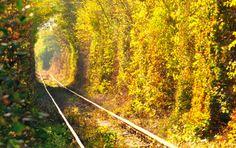 O túnel do amor é cartão postal da Ucrânia.