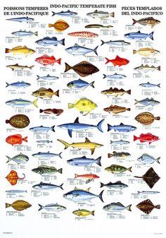 Pin On Fish Names